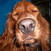Моя собачка))