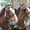 The Clydesdale Horses - Beautiful Creations Lord!