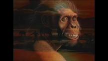 Apes or Ancestors? Exploring Human Origins