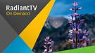 RadiantTV Episode 170506